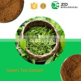 China supplier weight loss products green tea extract powder Green Tea Extract L-Theanine