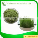 100% organic wheat grass juice powder with wholesell price/green grass drink