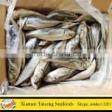 Factory Direct Supply Frozen Horse Mackerel Fish
