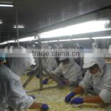 2015 new crop peeled garlic ,dehydrated garlic,garlic cloves from jinxiang country