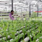 PVC Pipe Hydroponic System with Top Quality