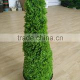 Yiwu Outdoor or indoor natural Conical artificial cypress topiary plant/tree for decoration