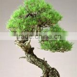China wholesale bonsai trees artificial banyan for decoration