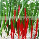 Hybrid green red chilli pepper seeds for sale-Te La No.2