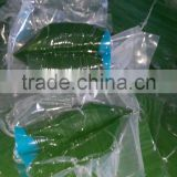 Use directly Bamboo Leaves Natural Bamboo Leaves high quality bamboo leaves Fresh Sushi Bamboo leaves