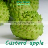 2016 Fresh Custard Apple