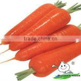 Carrots In Agriculture,Fresh Carrot Factory Price,Bulk Fresh Carrots