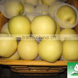 hot sale new arrival great taste fresh pear for sale/ New Season Asian Crystal Golden Pear