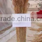 thatching roof water reed