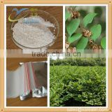 Pharmaceutical Raw Materials Anti-cancer Medicine Giant Knotweed extract Resveratrol