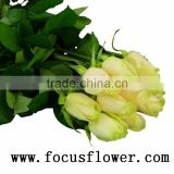 Beautiful big rose flower fresh cut dark red rose flowers yunnan vendela rose for decoration from china aibaba com