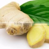 High Quality Fresh Organic Ginger