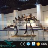Artificial animal life size dinosaur skeleton