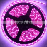 10M Cheap price 5630 / 5050 led strip rgb low voltage 12V non waterproof led flexible strip light christmas lights