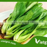 High Yield Chinese Kale (Kailan) Seeds VGCK Tropical Vegetable seeds