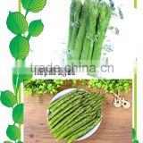 IQF green asparagus with BRC/Kosher/HACCP