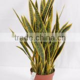 Landscaping decorative sanseviera plant/make artificial fake indoor potted plant/golden ede sanseviera plant