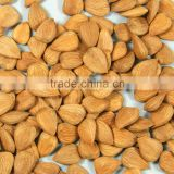 apricot nuts, kernel