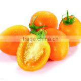 Good quality hybrid hot sale yellow oblong cherry tomato seeds for sale in greenhouse
