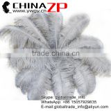 CHINAZP Factory Exporting Leading Bulk Sale Colored Stripped Silver Grey Large Ostrich feathers for Weddings