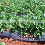 Agriculture Protection Solar Light Reflection Film White or Silver Black Layers Plastic Ground Cover Mulch Sheet
