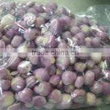 Exporter of Peeled Shallot
