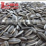 Best Sunflower Seeds for Malaysia