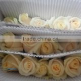black abaya Export fresh cut Rose Vendela flowers from Kunming roses flowers fresh roses
