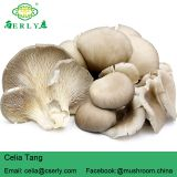 New Arrival High Quality Pleurotus Abalonus