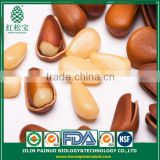 Wholesale Artificial Selection Fast Quick Food Open Pine Nuts in Shell