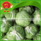 brands iceberg cabbage green fresh cabbage