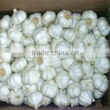 Hot selling dry garlic High Quality japanese black garlic garlic roaster