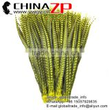 CHINAZP Factory Exporting Wholesale AAA Quality Long Dyed Yellow Lady Amherst Pheasant Tail Feathers for DIY