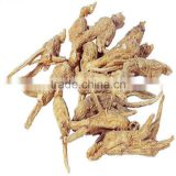 Chinese Angelica Extrat/ Dong-Quai/ Angelica Root Extract/ Extract from Angelica sinensis
