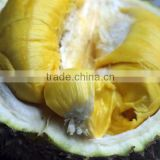 Fresh Durian - Best quality and Price - From VietNam