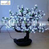 Hot sale mini cherry blossom tree cheap cherry blossom bonsai tree with high quality bonsai tree sale