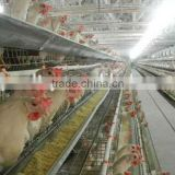 poultry farm equipment used in chicken house