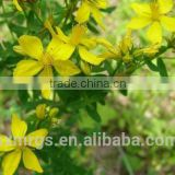100% Natural Hypericins 0.3% Hypericum Perforatum Extract