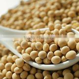 NONE GMO soybean from China