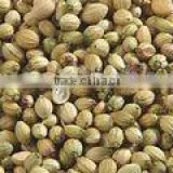 Coriander Seed 99% purity best quality
