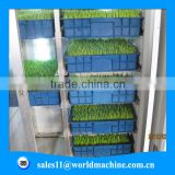 Wheat grass seeds barley malting machine