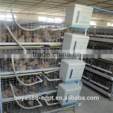 2016 New Design full automatic day old baby chicks cage system