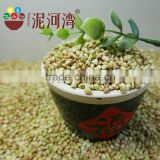 Professional manufacture of raw buckwheat kernel on hot sale