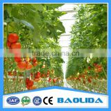 Galvanized Steel Pipes Greenhouse Structure With Hydroponic System