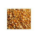 Yellow Corn Grade 1,Animal Feed,Yellow Maize Seed,Yellow Millet,Yellow Broom Corn Millet,Sorghum Grains