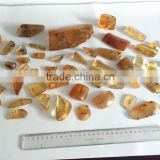 Colombian Amber (Copal) - Polished with insects