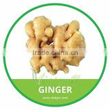 HIGH QUALITY ORGANIC GINGER