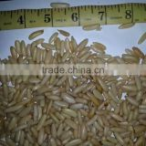 Middle East Quality Pine Nuts Kernel