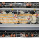 Zambia Chicken Supplier Chicken Shed Hot Galvanized Cage & A Type Battery Layer Breeding Chicken Cage & Breeding Layer Coop for Poultry Farm