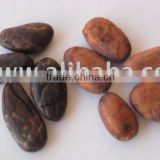Forastero cacao/cocoa beans/pods/seeds/nibs
